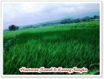 Karangnangka sawahan